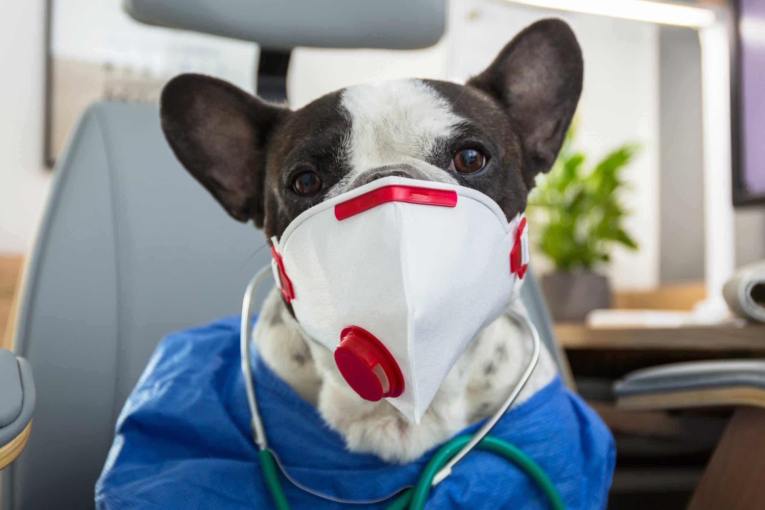 Coronavirus : est-ce que les animaux sont concernés ?