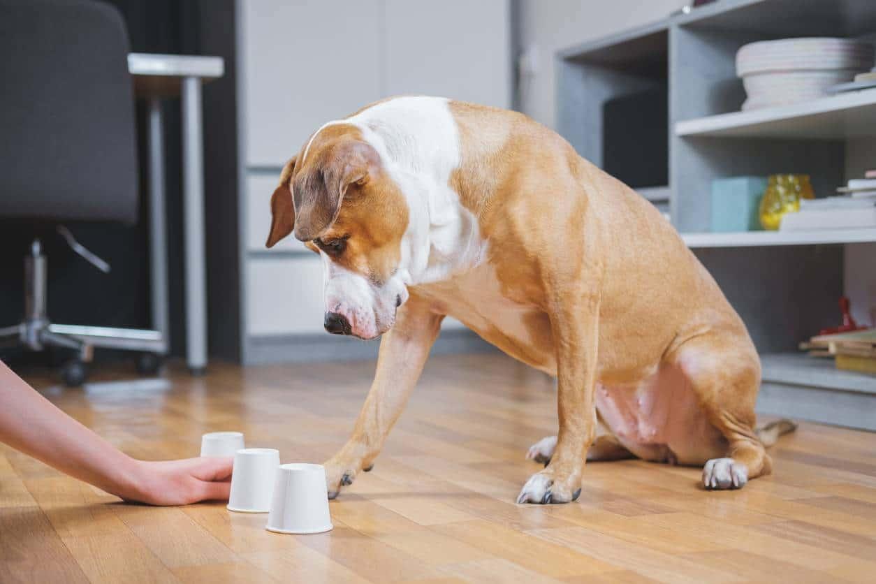 Comment garantir l'épanouissement de son chien?