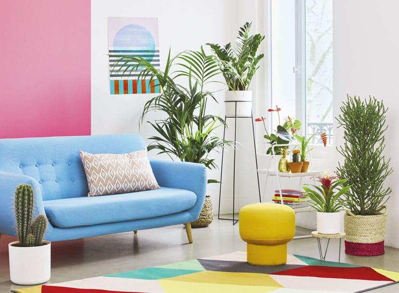 Bien choisir ses plantes d'intérieur ?